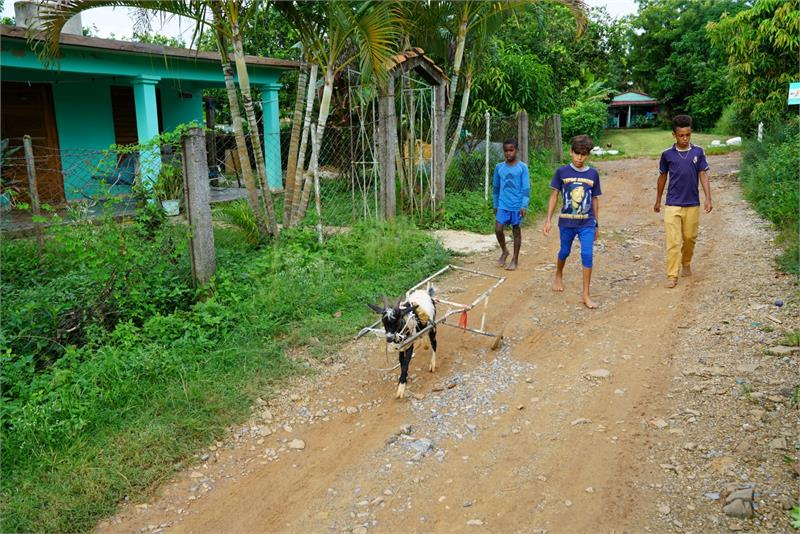 Aug 2017 - Local kids walking with goats in  Vinales