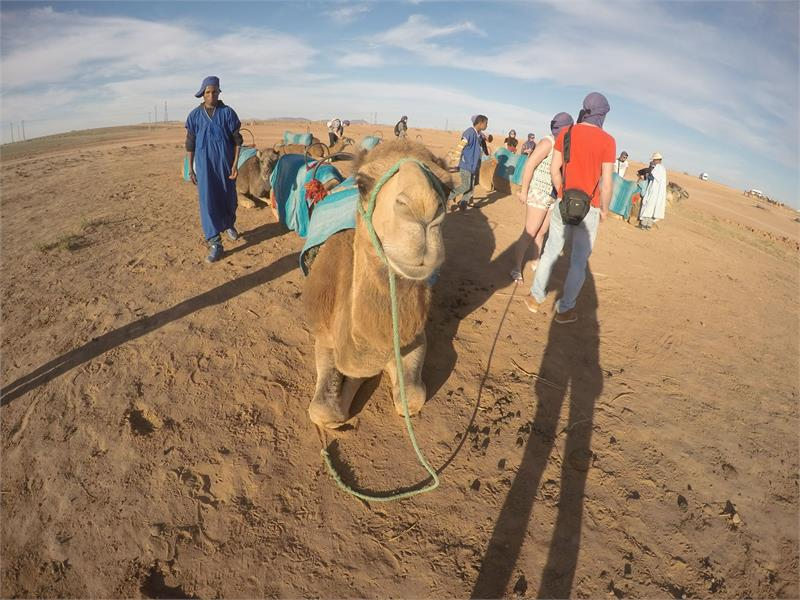 Apr 2020 - Camels of  Morocco
