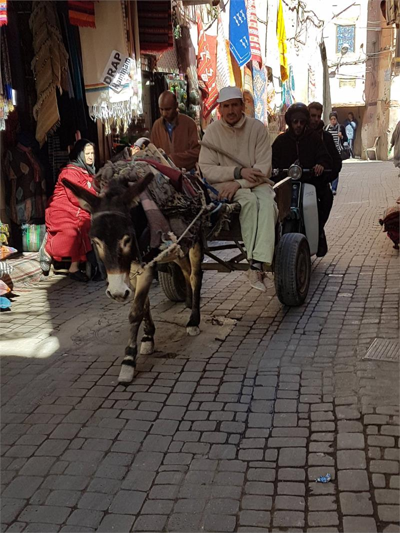 Apr 2020 - Donkey and cart