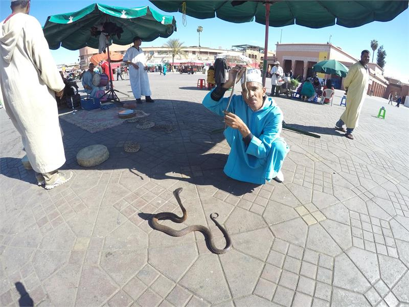 Apr 2020 - Snake charmer working his magic